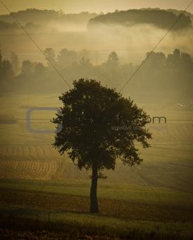 Single tree silhouette in morning fog