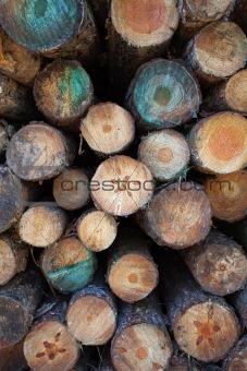 Timber log