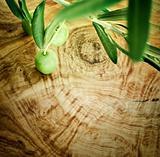 Olive branch on olive wood background