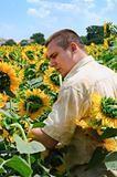 Farmer in a sunflower field