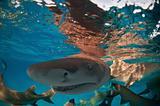 Shark escapade