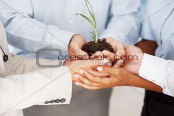 Business unity - Multi ethnic colleagues holding a tiny plant to