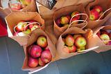Fresh apples in grocery bags