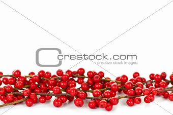 Red Christmas berries border