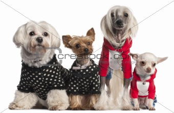 Four dogs dressed up in front of white background