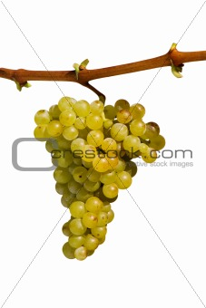 cluster of white grape