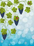 Floral background with vine. Vector illustration.