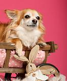 Chihuahua lying in wooden dog bed wagon with stuffed animal in front of pink background