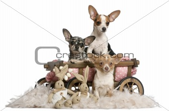 Three Chihuahuas with dog bed wagon and Easter stuffed animals in front of white background