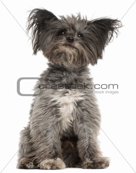 Mixed-breed dog, 7 years old, sitting in front of white background