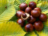 heap of horse-chestnuts