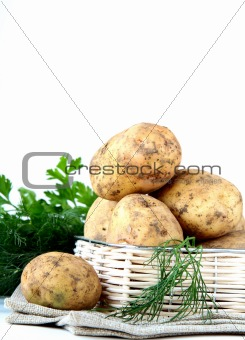 Basket of fresh organic potatoes