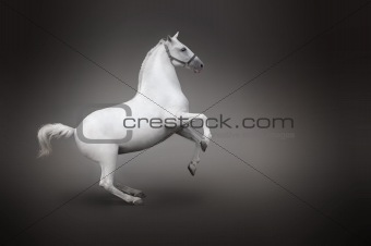 White horse rearing isolated - side view