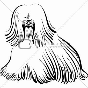 vector dog Tibetan Terrier breed