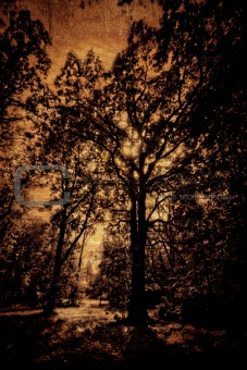 Grunge image of a tree