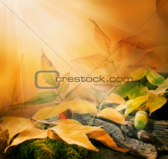 Forest background. Autumn border design with oak acorns