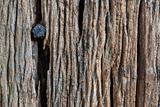 Wooden texture with rusty nail