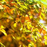 Colorful autumn leaves in beautiful sunlight