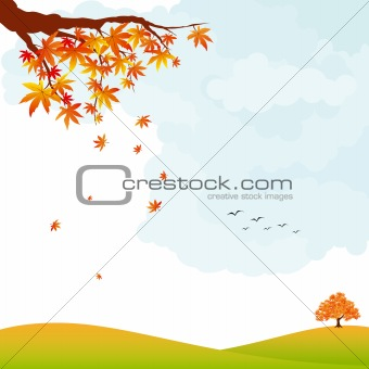 Autumn landscape colorful maple leaf and tree