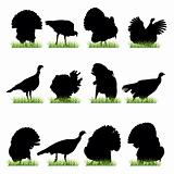 12 Turkeys Silhouettes Set