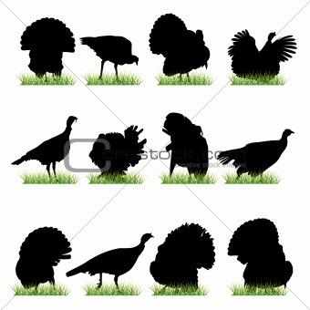 12 Turkeys Silhouettes Set