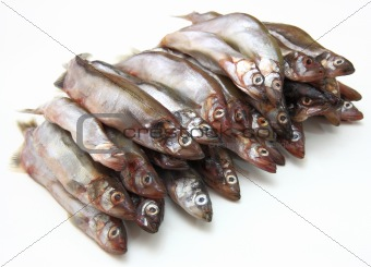 Fresh fish sprats