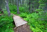 Glacier National Park Hiking Trail