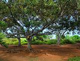 Exotic tropical garden