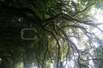 cloudforest way