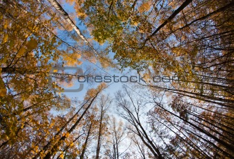 Autumn sky in forest