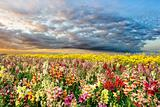Colorful summer field
