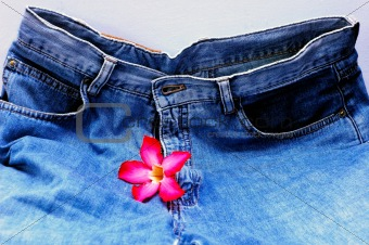 blue jeans and the flower (adenium)