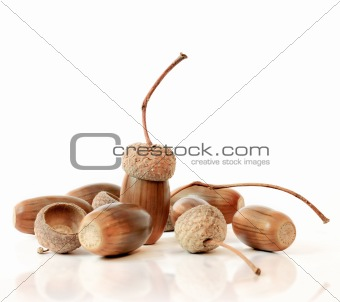 Acorns on white background