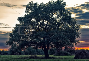 a beautiful tree at sunset in hdr