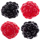 Four raspberry and blackberry