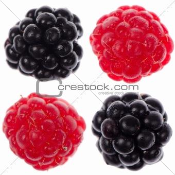 Four raspberry and blackberry