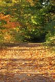 Autumn leaf covered path