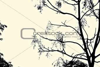 Black Tree