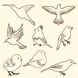 Set of differnet sketch bird