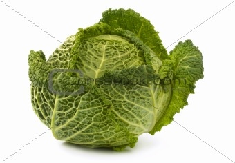 Savoy cabbage, isolated