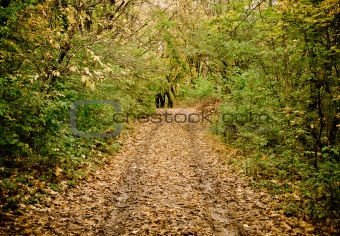 Autumn landscape: road in a grove