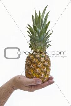 Single pineapple in men's hand