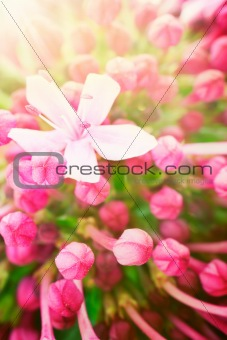 Beautiful abstract floral background