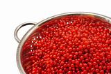 Fresh red currant berries with water drops in colander - isolated