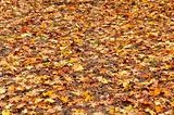 Many yellow and orange dry leaves lying on the ground