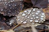 Wet grunge leaf.