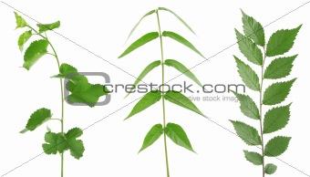 three green branch