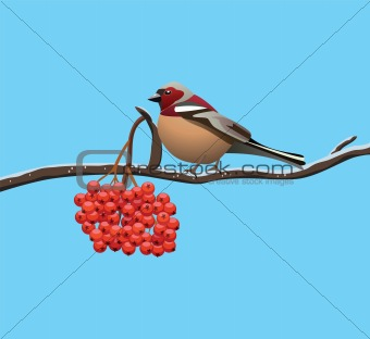 bird on a branch of rowan tree