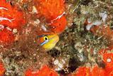 Cheeky fish