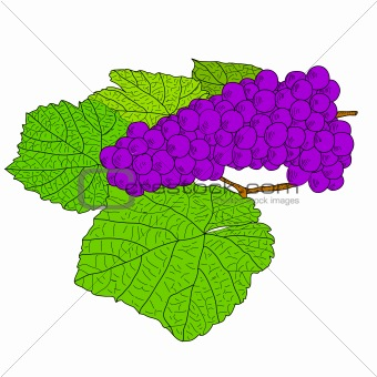 Abstract Grape with leafs (Vector)